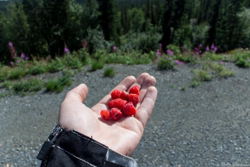 Raspberries! Nom!